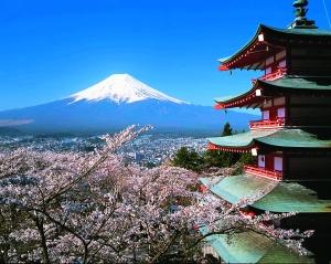 日本本州北海道七天赏樱之旅