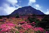 香港往返--韩国首尔济州5天浪漫春之旅(春天赏樱)
