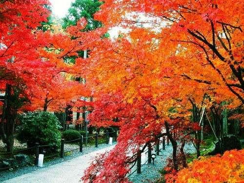 日韩——韩国首尔赏枫济州温泉皇牌5日游(国庆)