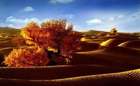 B1线:新疆天吐、南山牧场、敦煌莫高窟、玉门关雅丹、兰州双飞六日品质