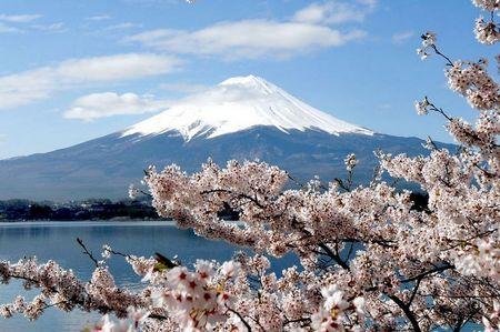 春之樱花祭 日本本州伊豆温泉饕宴六天之旅(香港往返)