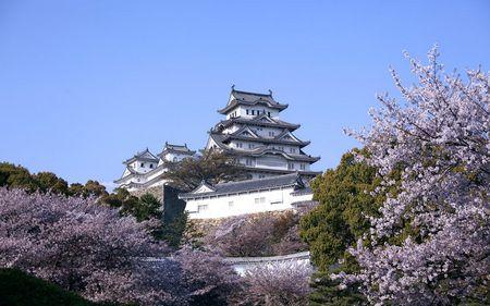 春之樱花祭 日本本州伊豆温泉饕宴六天之旅