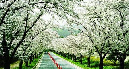 花现韩国-首尔时尚享乐五日游