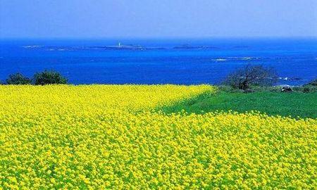 春之恋-(香港三飞)韩国首尔济州五日游