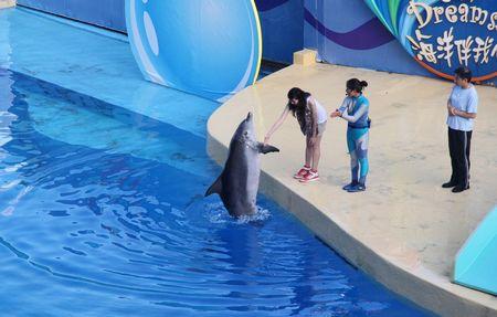 港澳三天经典优质团(海洋公园+澳门)