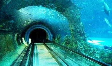 【乐享暑假】乐享暑假海洋博物馆亲子七日游