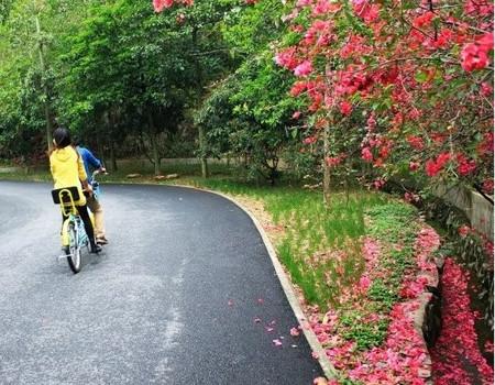 D:【惠州*博罗】那里花开风景区、怡情谷温泉、红花湖单车、西湖两日游