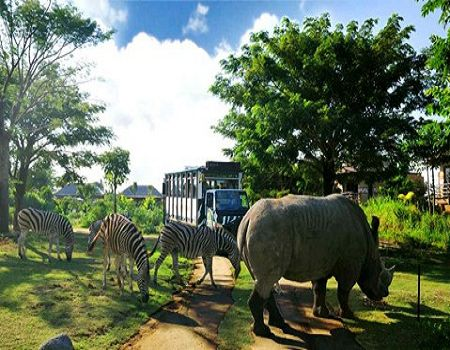1月---蓝点风情PULS--巴厘岛动物园奇妙之旅五天四晚