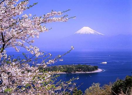 (深圳往返)春の櫻花祭 日本本州伊豆溫泉饕宴六天之旅(5星)