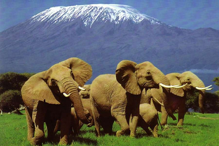 W:肯尼亚精彩8天