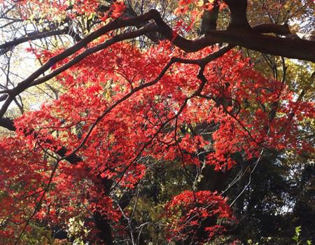 F;北海道红叶深度之旅6天游