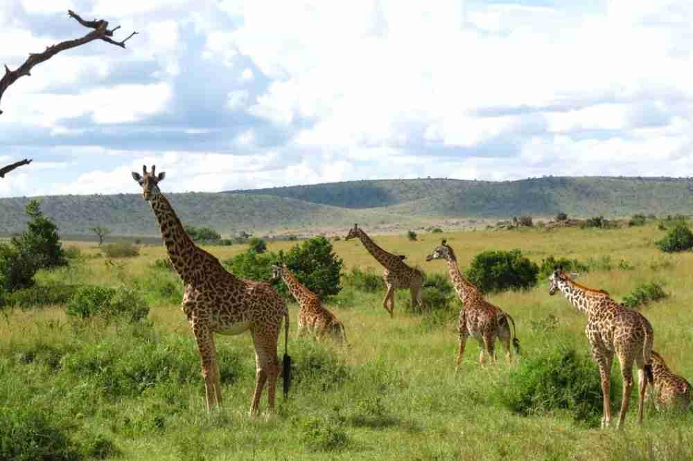 肯尼亚动物迁徙亲子欢乐10天之旅