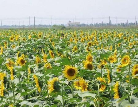 B2线:深圳、珠海、广州三天休闲游