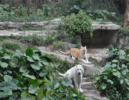 M:【动物+水世界】广州长隆野生动物园、国际大马戏(自费)、长隆水上乐园两日游