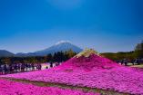 春暖花开时,拿着签证玩遍日本