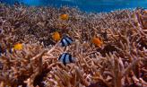 塞班岛必去景点--水晶湾珊瑚花园