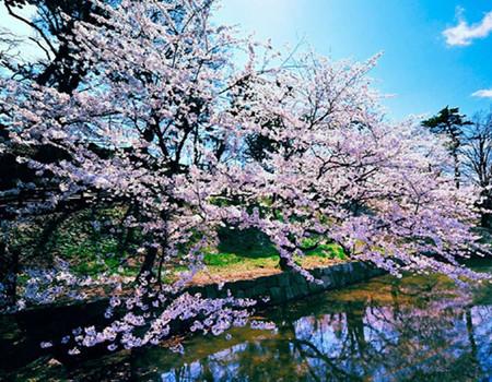 ZH:【樱花绽放】日本本州温泉酒店、热海梅花祭、河津樱花祭、大阪六天超值游(深圳往返)