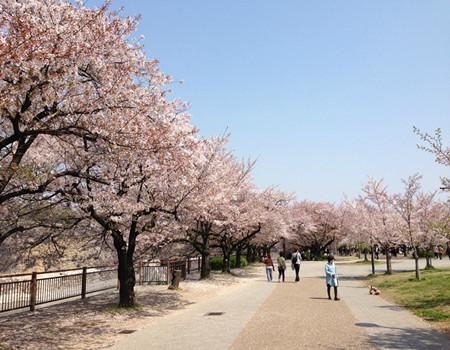 Z;日本本州北海道温泉五天尊享之旅