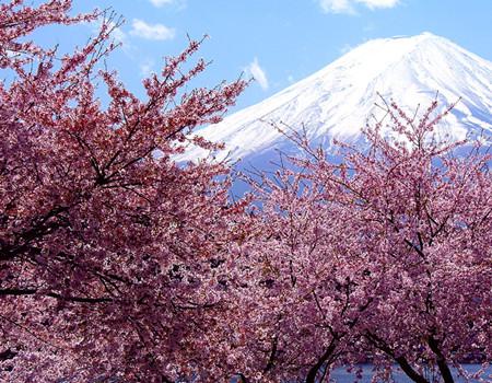 Z:东京自由活动、富士山、京都、五天半自助游