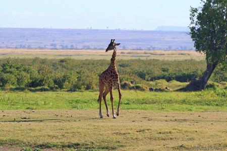 肯尼亚轻奢野趣10天之旅