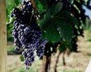 如何品尝新西兰的葡萄酒