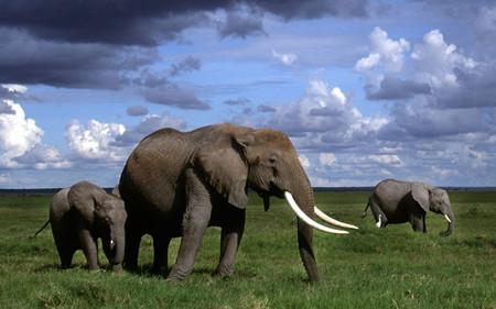 W;肯尼亚全景深度10天之旅