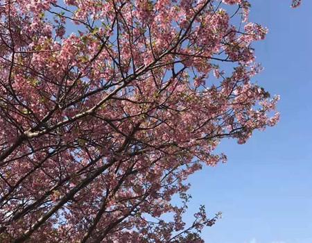 F:枫秋色-日本本州北海道美食温泉七天游(深圳往返)