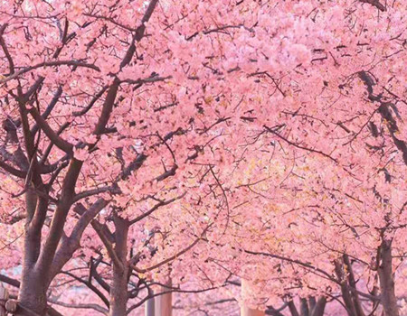 F;冬季恋歌系列─日本本州双古都温泉享游6天游(深圳往返)