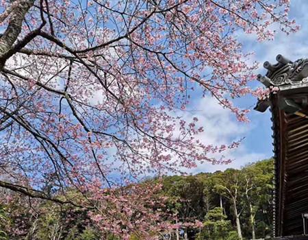 F;粉樱乱舞─ 日本本州米其林三温泉享乐6天团