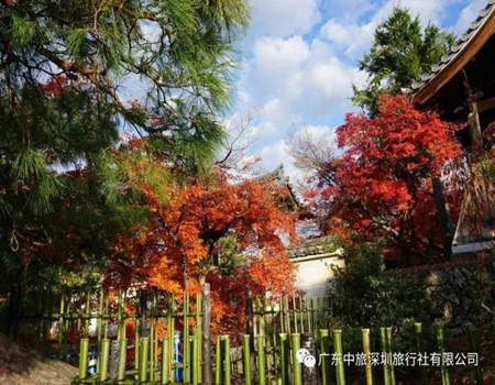 F;冬季恋歌系列 ─ 日本本州三古都双温泉锦绣6天深度游(香港往返)