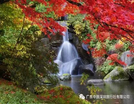 Y;日本世界遗产富士山.奈良神鹿公园.大阪城公园.和服体验双古都六日经典游(深圳往返)
