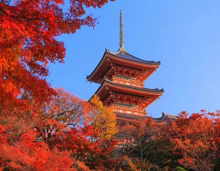 Y;日本富士山GRINPA雪乐园.奈良神鹿公园旅拍半自助六天深度游(东京自由活动)